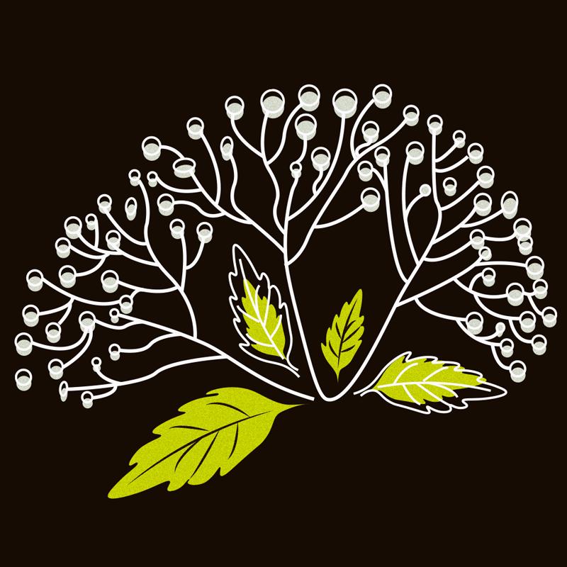 moevenpick-elder-grain
